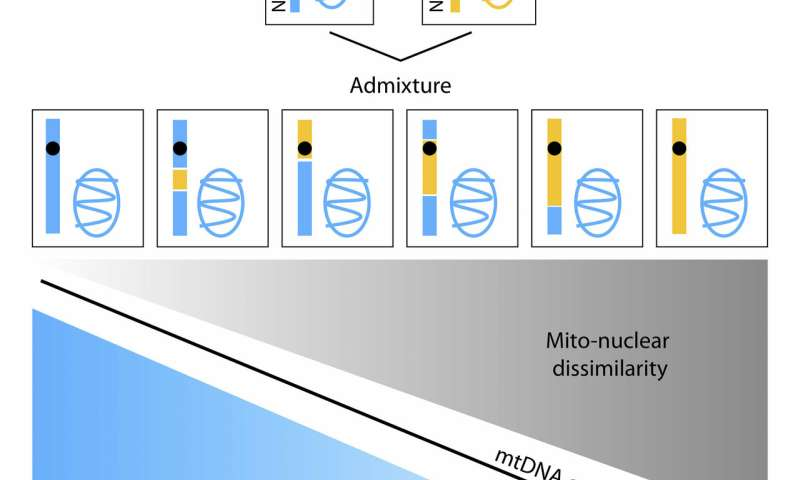 Differences in genes' geographic origin influence mitochondrial function