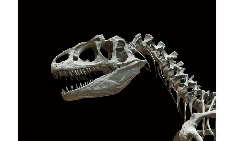[Image: dinosaur.jpg]