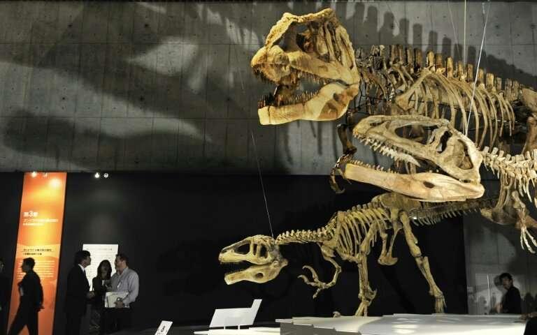 Dinosaur skeletons on display at Tokyo's Science Museum