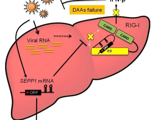 Discovery of a host mRNA that inhibits immune functions of antiviral protein RIG-I