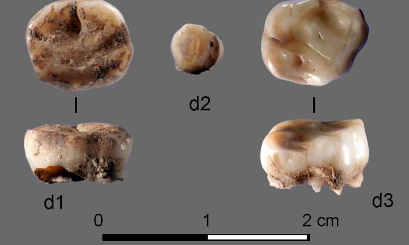 DNA from 31,000-year-old milk teeth leads to discovery of new group of ancient Siberians