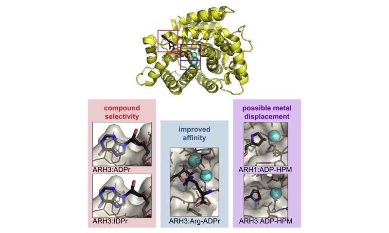 DNA SOS: Understanding DNA signaling pathways