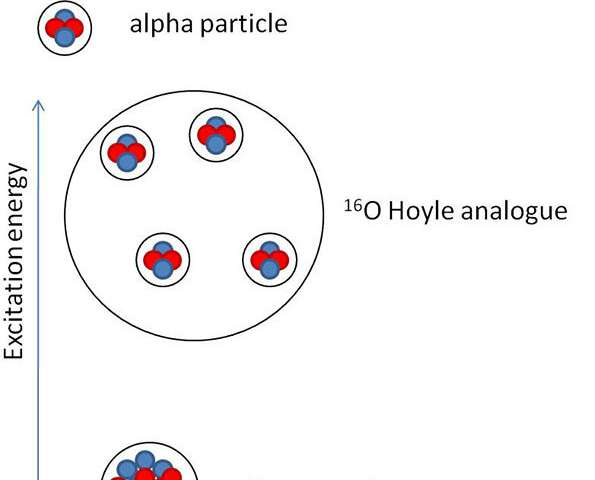 Do alpha particle condensates exist in oxygen nuclei?