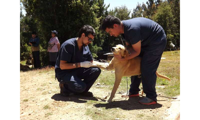 Dog rabies vaccination programs affect human exposure, prophylaxis use