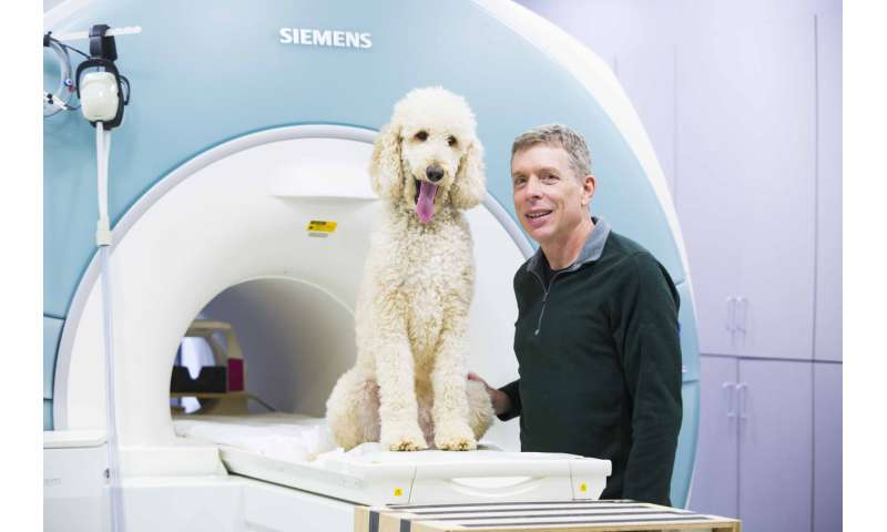 Dogs process numerical quantities in similar brain region as humans, study finds