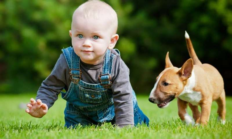 Dog training for babies? Only if you want to raise kids who are anxious and unsympathetic