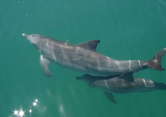 Dolphin study reveals the genes essential for species' survival