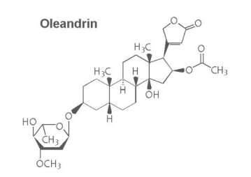 Drug oleandrin may be an effective new way to treat HTLV-1 virus, SMU study shows
