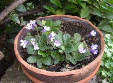 Drying without dying: how resurrection plants survive without water