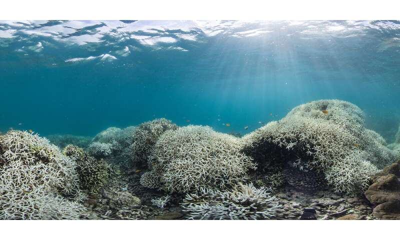 Dual approach needed to save sinking cities and bleaching corals