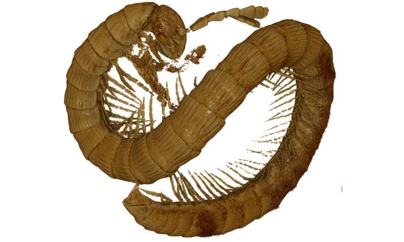 Dwarfs under dinosaur legs: 99-million-year-old millipede discovered in Burmese amber