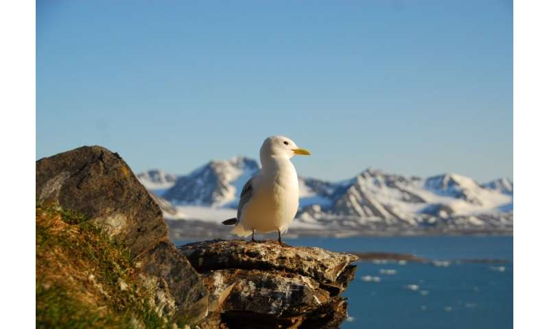 Early breeding season for some Arctic seabirds due global warming