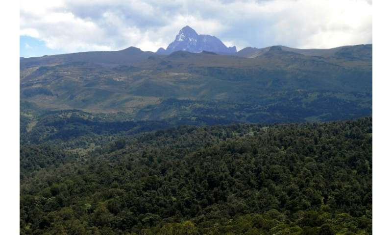 East Africa alone has lost 6 million hectares of forest since 2000