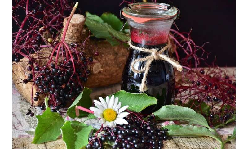 Eating elderberries can help minimize influenza symptoms