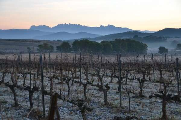 Ecological vineyards help protecting bird population in the environment