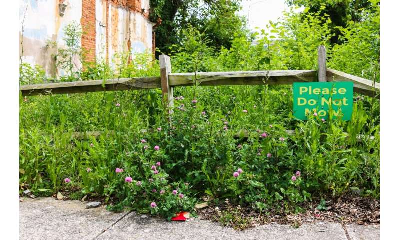 Ecologist Christopher Swan and his team planted this garden on a vacant lot in Baltimore, Maryland, showing they could turn eyes