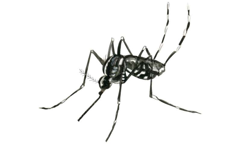 Egg yolk precursor protein regulates mosquitoes' attraction to humans