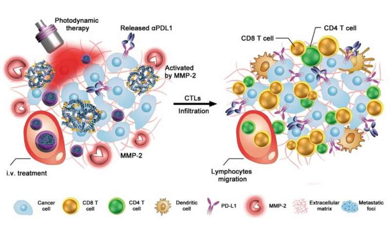 Elegant antibody nanoparticles override immunological tolerance of tumors