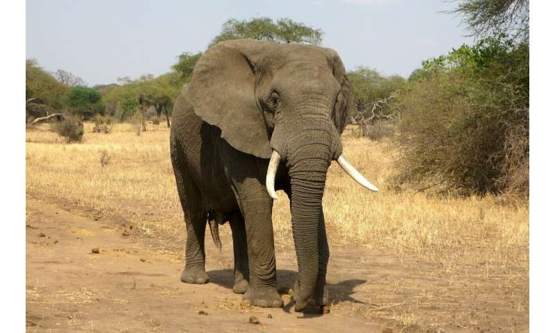 Capturing elephants from the wild hinders their reproduction for over a decade
