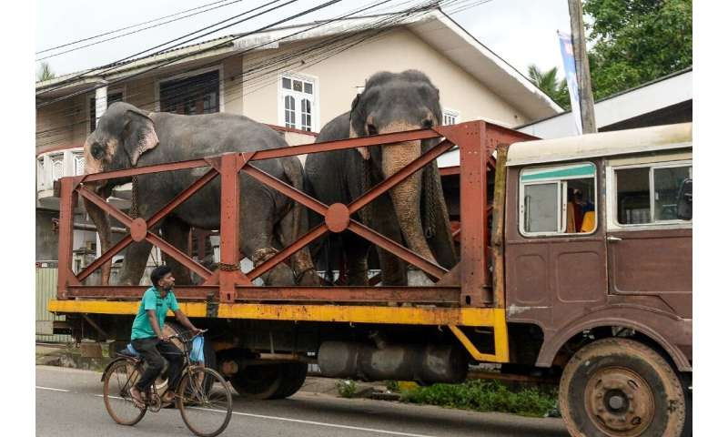 Elephants are a protected animal in Sri Lanka and new rules will increase the length of jail time for those found to have been c