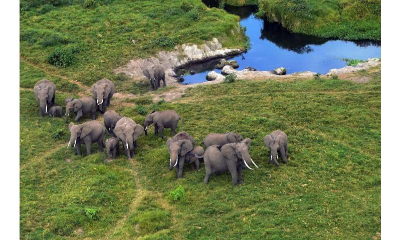 Elephants likes these in Kenya's Amboseli National Park, will enjoy more protection from being taken to Western zoos