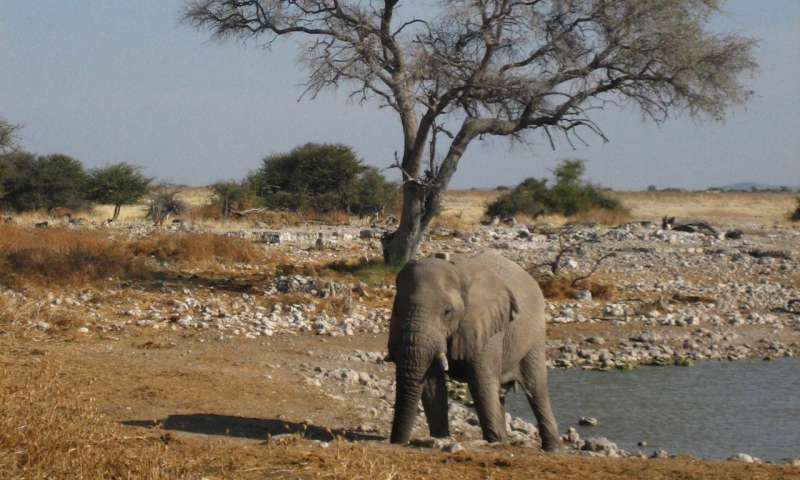 Elephants take to the road for reliable resources