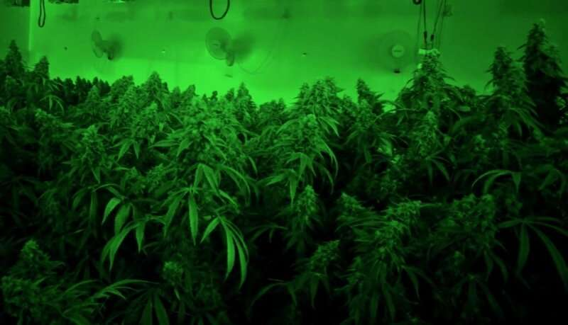 Emissions from cannabis growing facilities may impact indoor and regional air quality