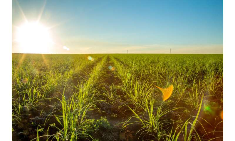 Ethanol fuels large-scale expansion of Brazil's farming land