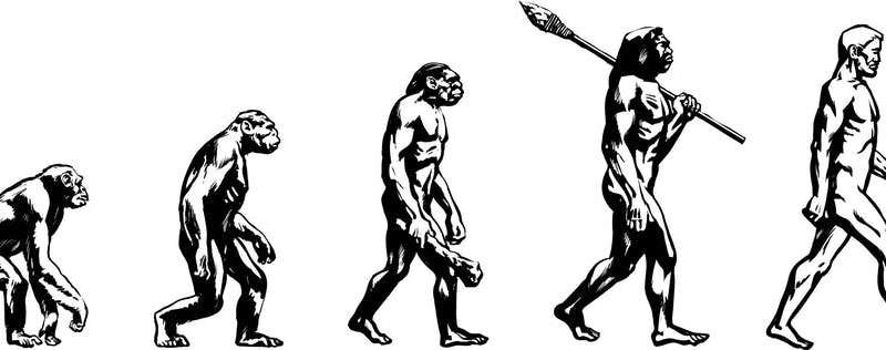 Evolution doesn't proceed in a straight line – so why draw it that way?