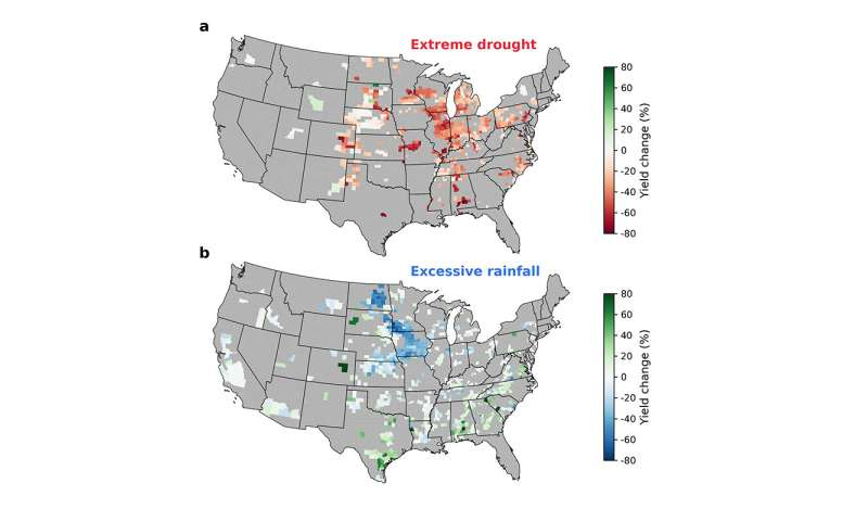 Excessive rainfall as damaging to corn yield as extreme heat, drought