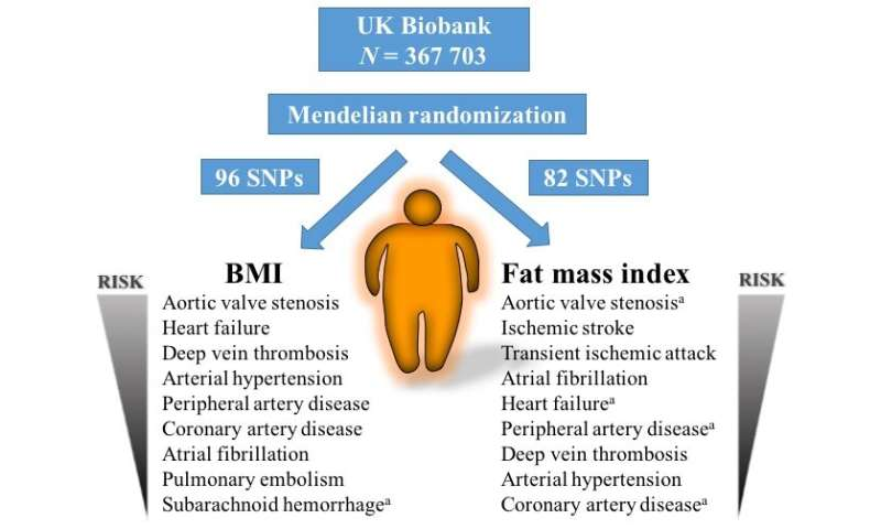 Excess weight and body fat cause cardiovascular disease