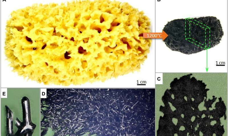 Extreme biomimetics – the search for natural sources of materials engineering inspiration