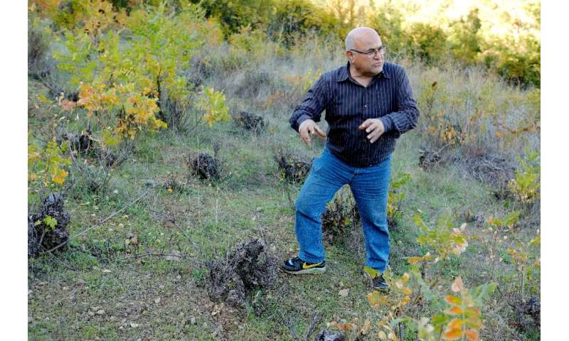 Farmer and mayor Christodoulos Orphanides says the mouflon eat the carefully cultivated grapes in vineyards