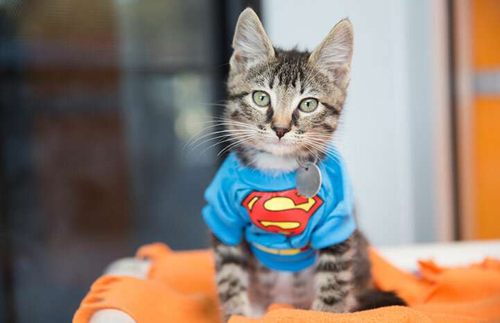 Feline superheroes assemble to investigate tummy trouble