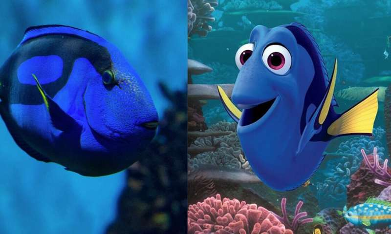 3a594fcde68 Finding Dory' did not increase demand for pet fish, despite viral ...