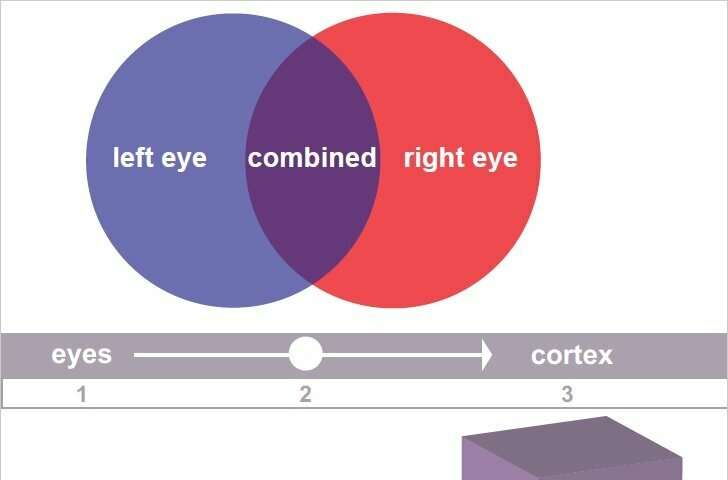 Findings on eye-signal blending re-examines Nobel-winning research