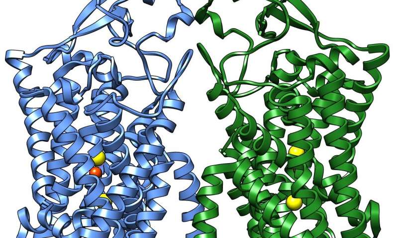 First structure of human cotransporter protein family member solved