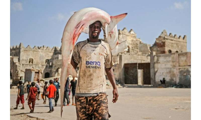 Fishing of sharks and rays is common in Liberia and they can be seen in port markets around Africa, such as in Somalia's capital
