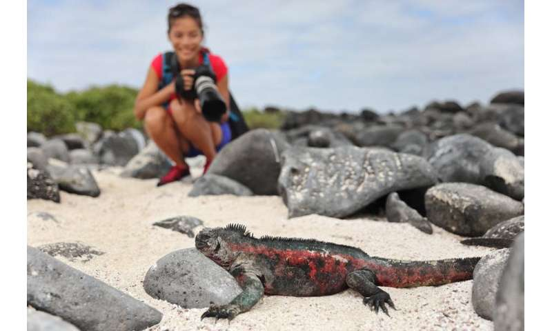Five ways to be a responsible wildlife tourist