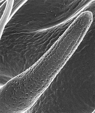 Flies smell through a Gore-Tex system