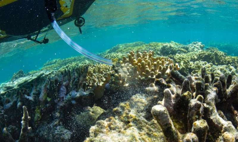 Floating nurseries and robotic fleet deliver coral babies to damaged parts of Great Barrier Reef