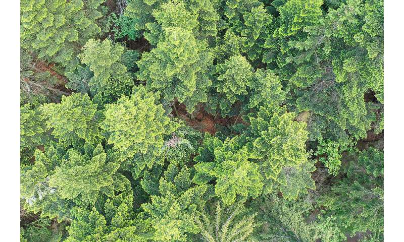 Forests on the radar