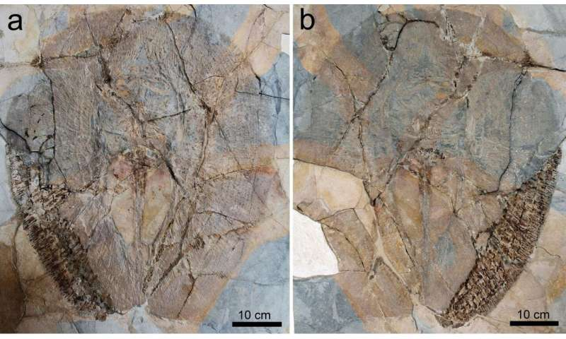 Fossil fish gives new insights into the evolution