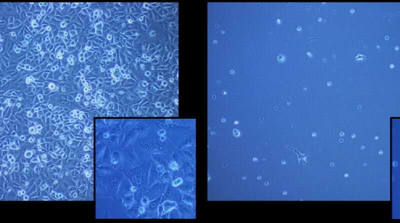 Freezing cells made safer thanks to new polymer