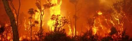 From dreams to fire: how Aboriginal Australians shaped biodiversity