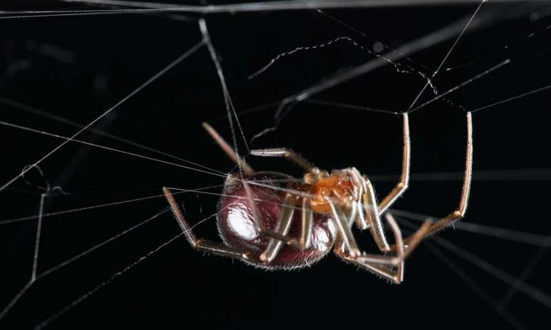 From fear of spiders to fascination