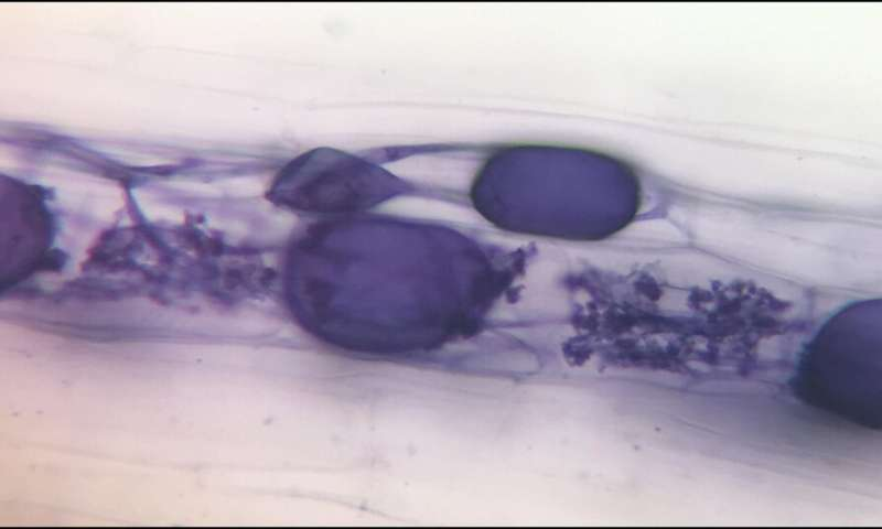 Fungi could reduce reliance on fertilizers