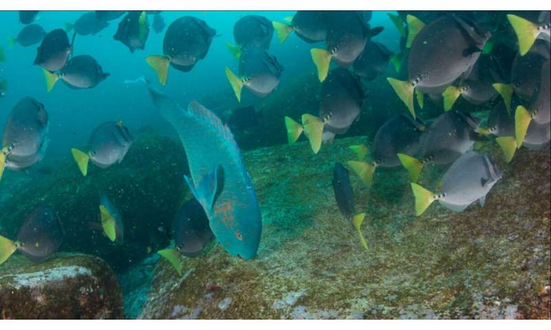 Galapagos study highlights importance of biodiversity in the face of climate change