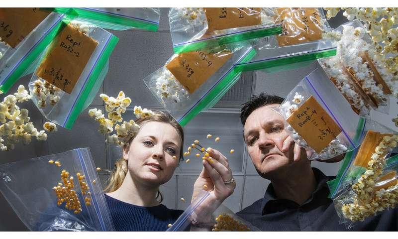Genetics efforts enriching nutrition of popcorn, sorghum