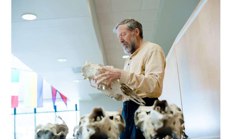 Genomics of Isle Royale wolves reveal impacts of inbreeding